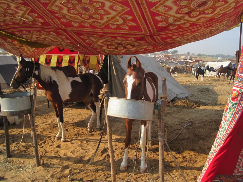 horse tent bettr