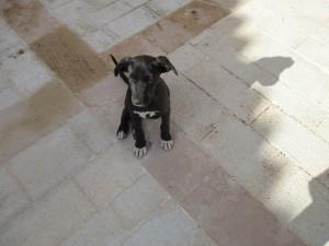 dog cute1