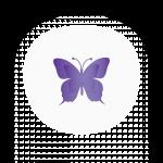Butterfly_Web_6