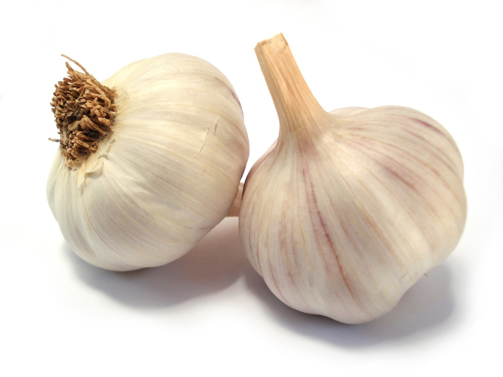 Garlic-1-Ale-Paiva-sxc