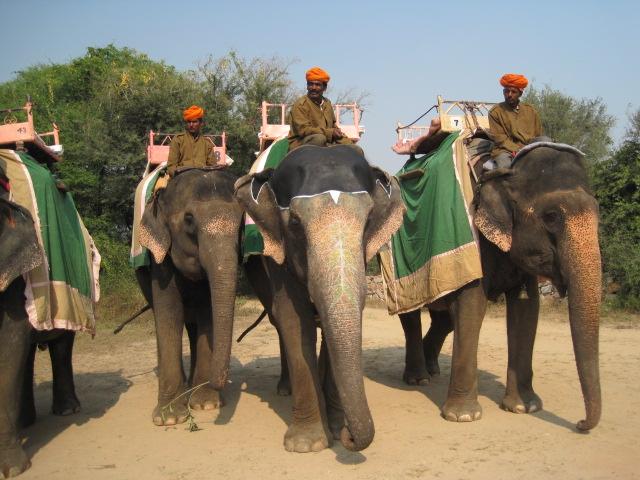 elephants many
