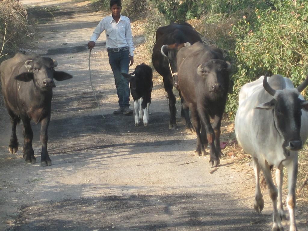 herder2 good