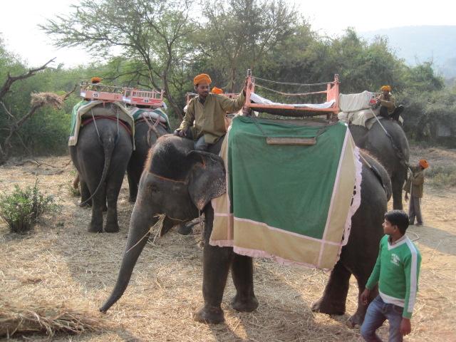 My sweet elephant
