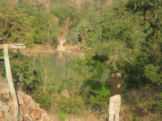 Our tracker tries to spot a tiger