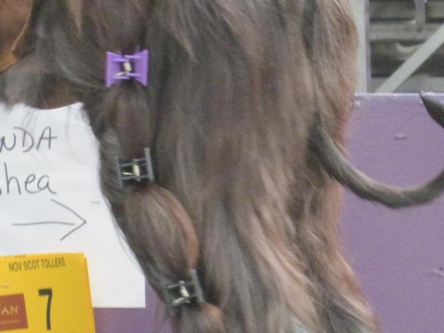 dog hair clips