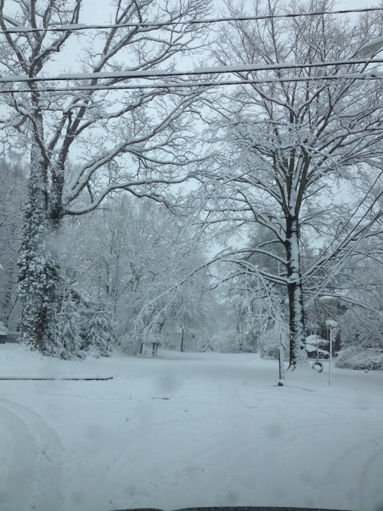 Photo by Bonnie Steward, New Jersey