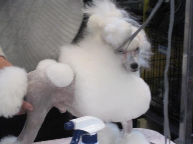 poodleprimp use