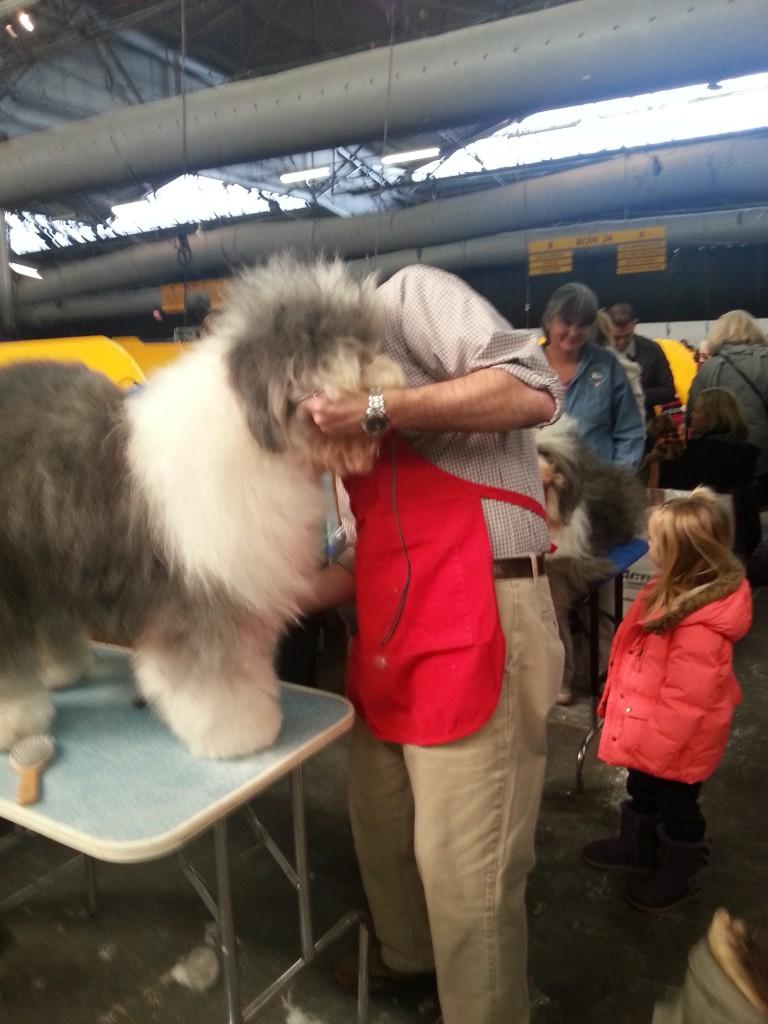 sheepdog groom