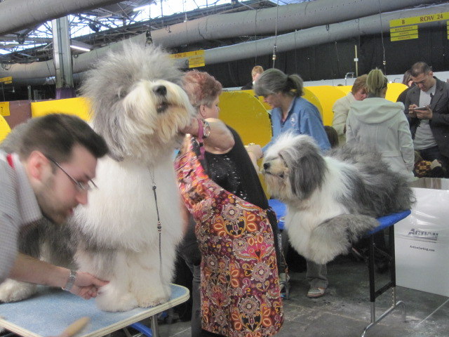 sheepdogs2 primp