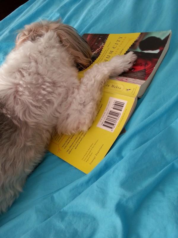 Dog sleeps on book