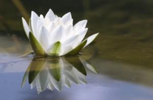 Lotus flower floats