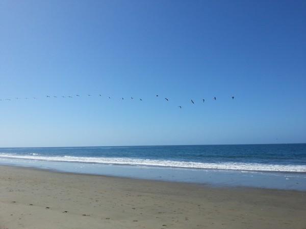 pelican sky 2