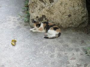 cat roman amphi