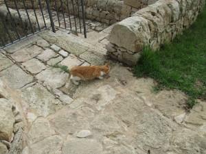 cat yellow2