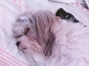 ri asleep