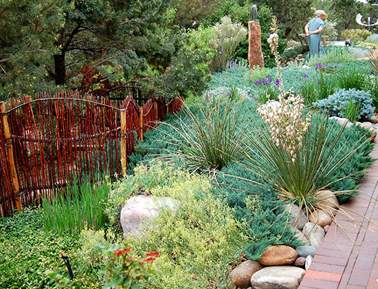 Not everyone can afford an artful xeriscape.