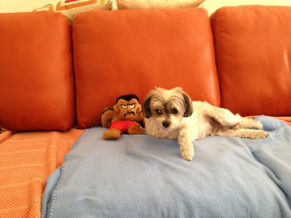 Ri and toy