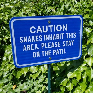 snakes path