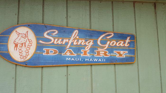 surfing-goat