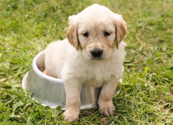 puppy-1207816_640